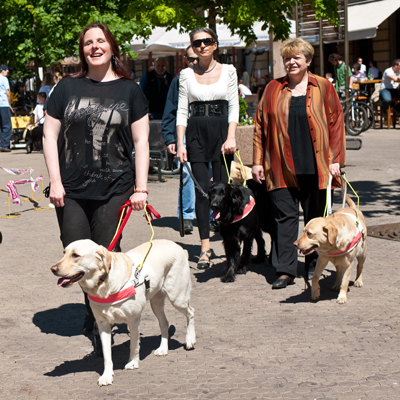 psi vodiči