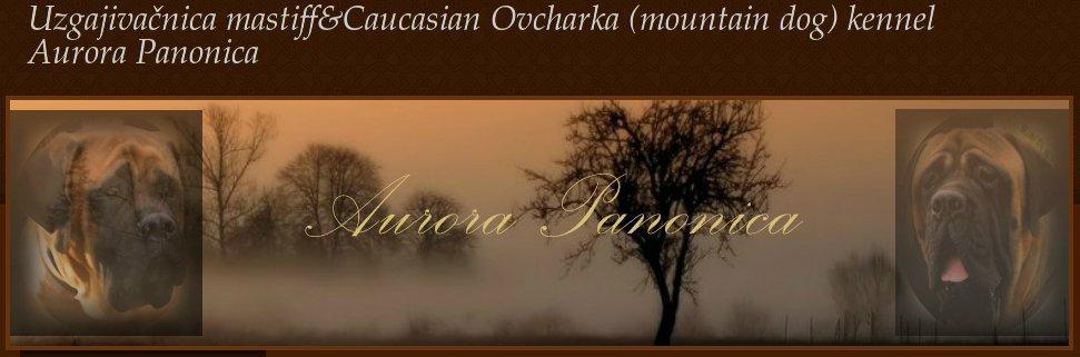 Aurora Panonica - uzgajivačnica engleskih mastifa i kavkaskih ovčara